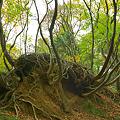 写真: 生命の木