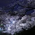 Photos: 夜桜追っかけ最終章1