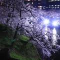 Photos: 夜桜追っかけ最終章3