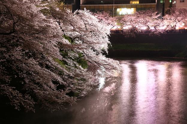 Photos: 夜桜追っかけ最終章4