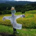 写真: 田んぼの守り神