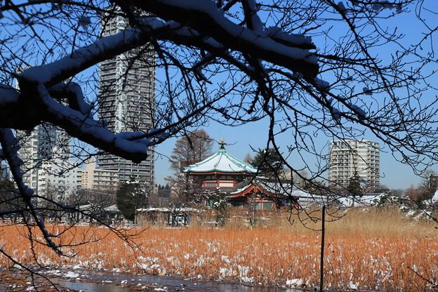 雪の弁天堂