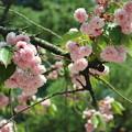 写真: ピンクの花たち