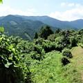 写真: 悠久なる故郷の山々は母なる大地