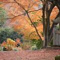写真: 紅葉いっぱい