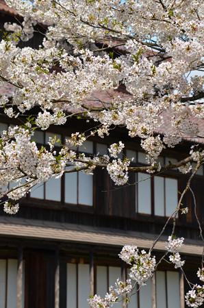 170422松ヶ岡開墾場 桜と開墾記念館01