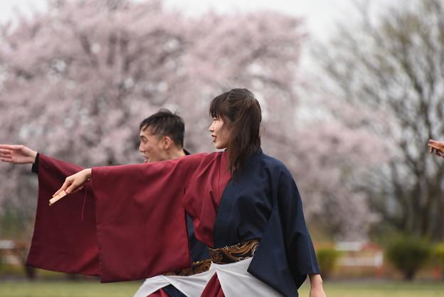 熊谷桜よさこい 彩嵐風5
