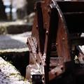 写真: がいせん桜と水車