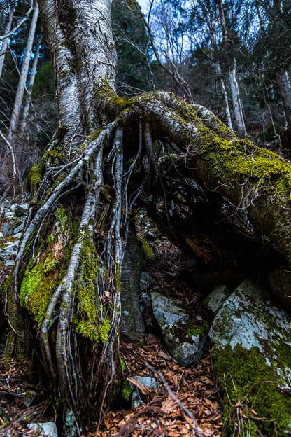 耐え忍ぶ巨木