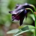 写真: 黒いベル