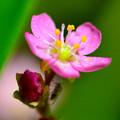 写真: 綺麗な花には....