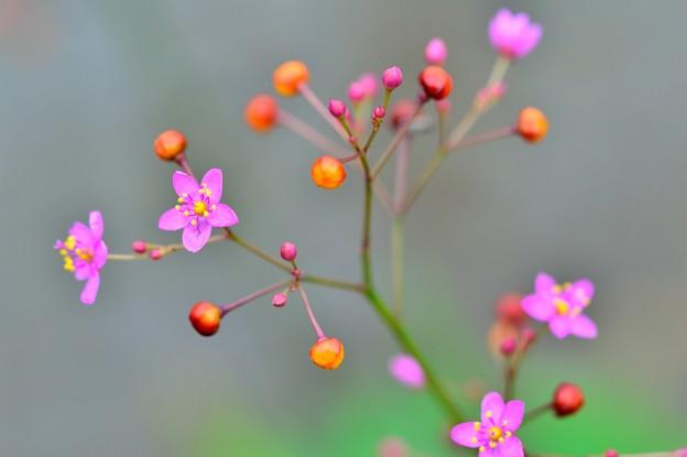写真: ピンク花火