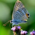 写真: 蝶もゆっくり