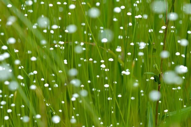 写真: 湿地に降る雪