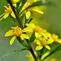 写真: 秋の黄色は