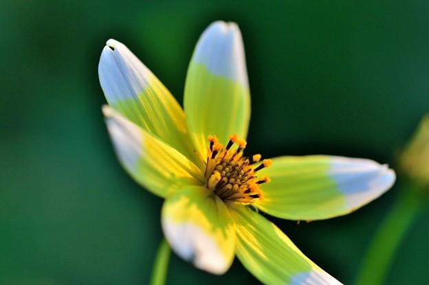 写真: 冬に咲かなくても