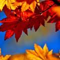 Photos: 秋の煌めき