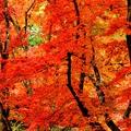 秋色に萌え~