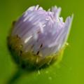 写真: 春光を包む