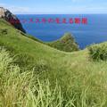 ムニンススキの生える断崖