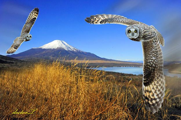 富士山とコミミズク(修正)