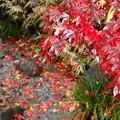 写真: 秋よ!さよなら