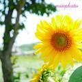 君の笑顔の色 Lovedaesung