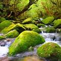 苔生しの森