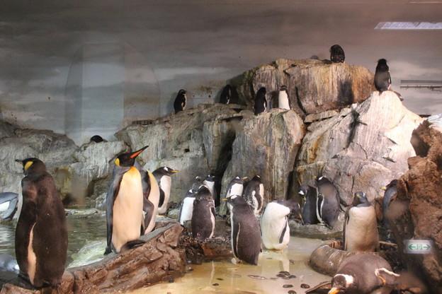 極地動物館のペンギン