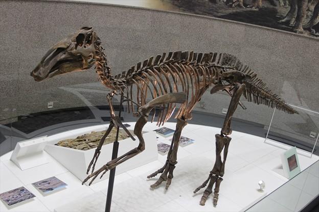 エドモントサウルス上から
