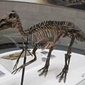 Photos: エドモントサウルス上から