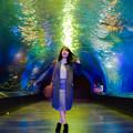 写真: Light & Colours in Aquarium