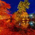 写真: 11月的弘前城點燈