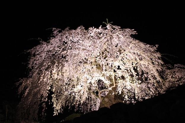 暗闇に咲く桜