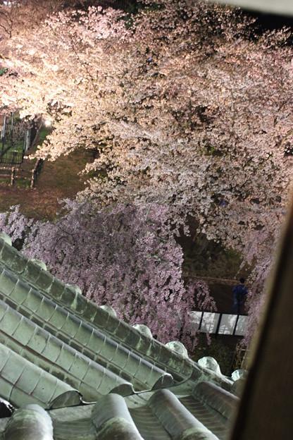 天守閣から望む桜