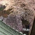 Photos: 天守閣から望む桜