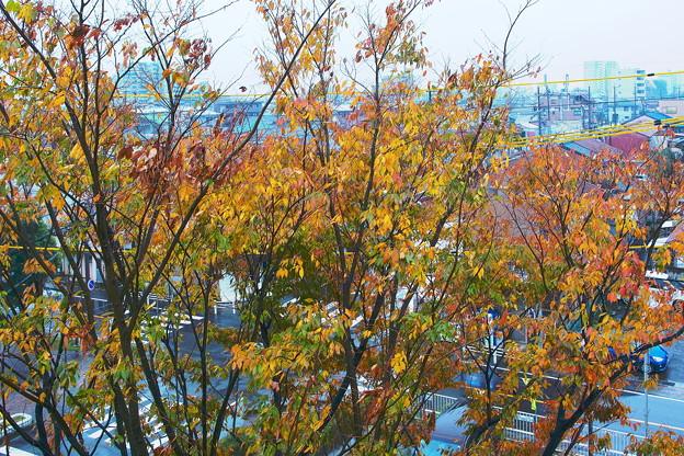 写真: 秋雨
