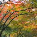 写真: 犬山寂光院の紅葉(1)