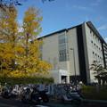 Photos: ノーベル賞山中教授 iPS細胞研究所銀杏 Yellow ginkgo leaves