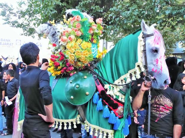 イランの緑馬 Decorated horse,Iran