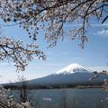 写真: 桜富士
