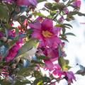 Photos: 散歩道の野鳥1