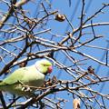 写真: 散歩道の野鳥3