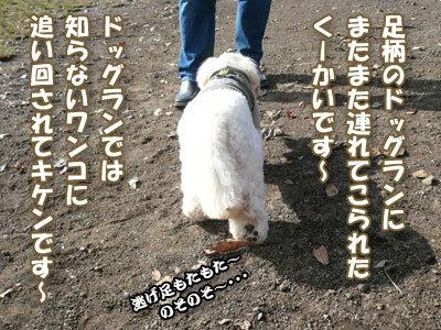 091123_ashigara_sa_koo_1