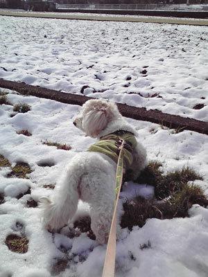 雪の中でくーかい2