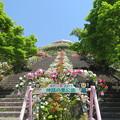 写真: 花と緑