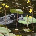 写真: 深泥池2