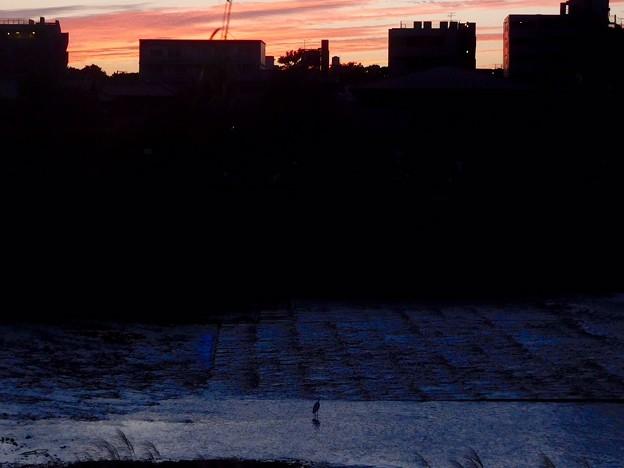 写真: 鴨川夕景