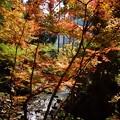 写真: 北山の紅葉