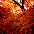 写真: 紅葉 5